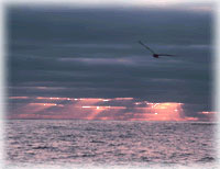 [Ocean/Climate:bird flying over ocean in sunset image]