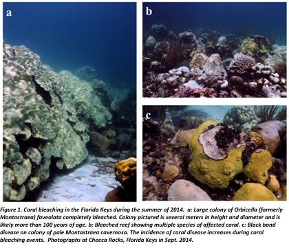 ocean chemistry and ecosystems weekly news