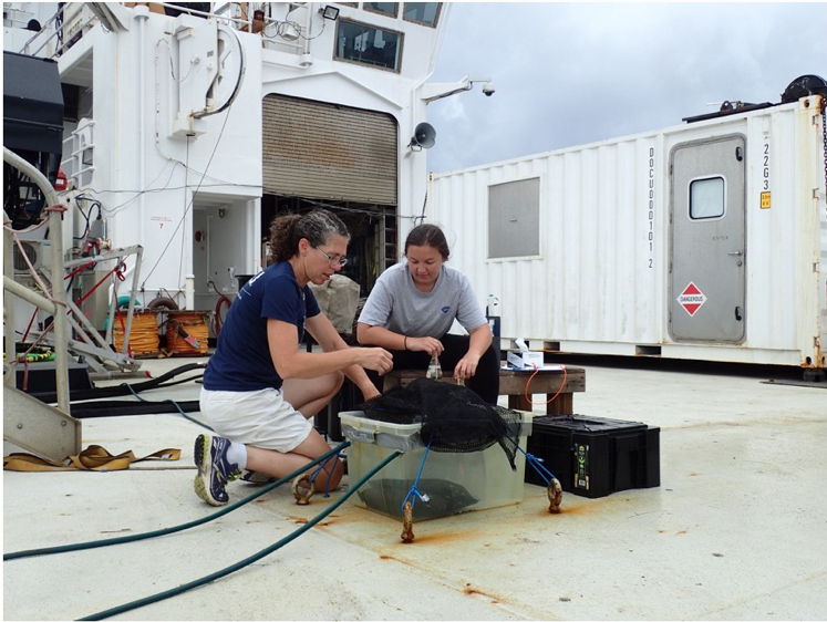"Figure 6: Setting up oxygen change experiments in a mini ""ocean"" on deck."