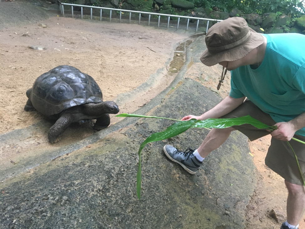Scientist Andrew Whitley feeding a giant tortoise.  The animals are native to the region and can grow up to 250 kg (over 500 pounds) and have been proven to live longer than 170 years.