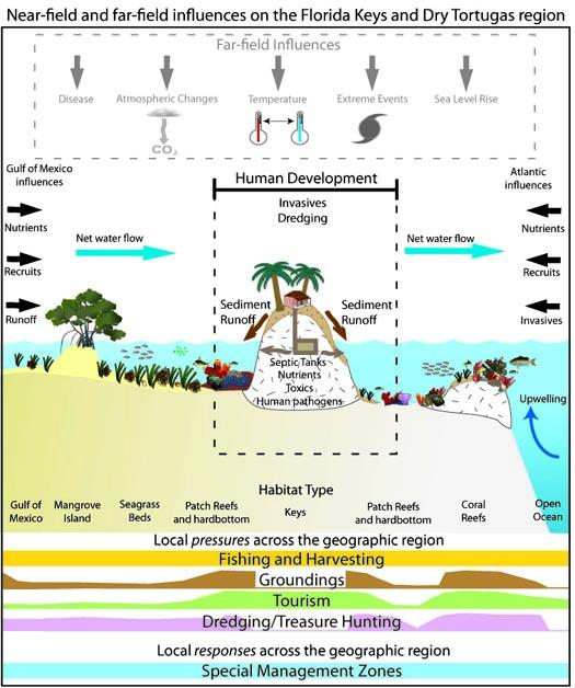 MARES conceptual diagram