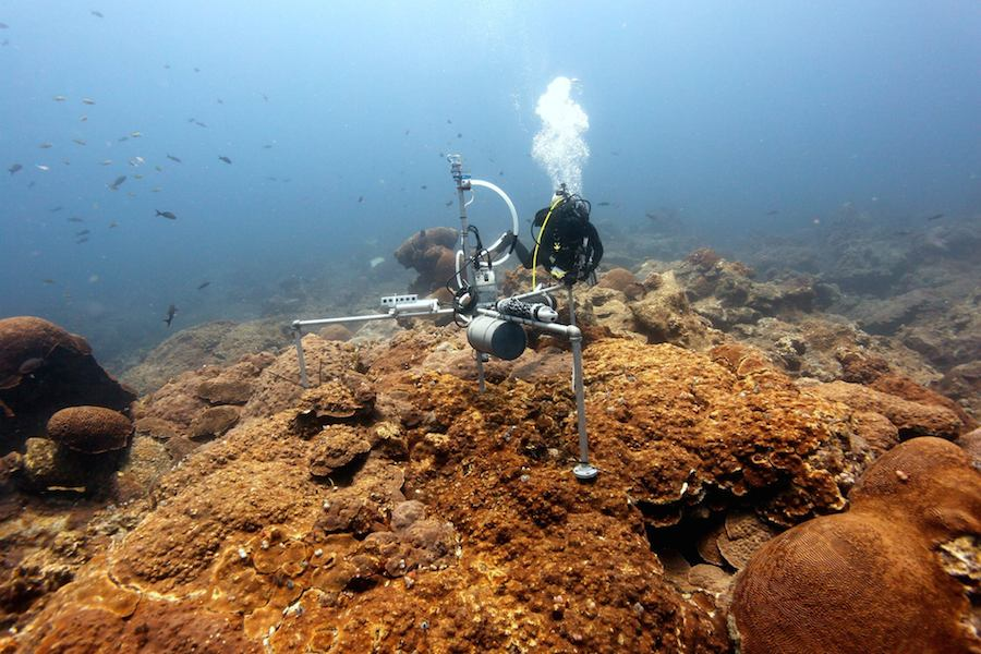 ACCRETE researcher Lauren Valentino collects data from a Benthic Ecosystem Acidification Monitoring System station in the Flower Garden Banks National Marine Sanctuary. Image credit: NOAA