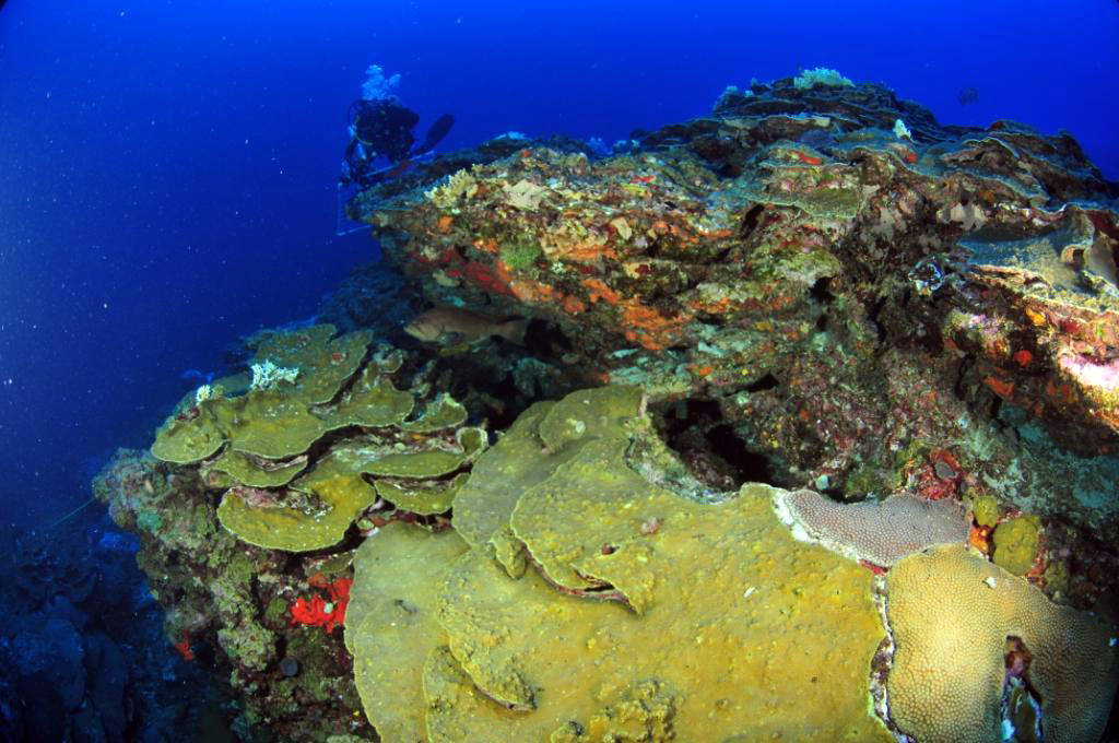 Aoml Establishes New Sites To Monitor Ocean Acidification In Gulf Of Mexico