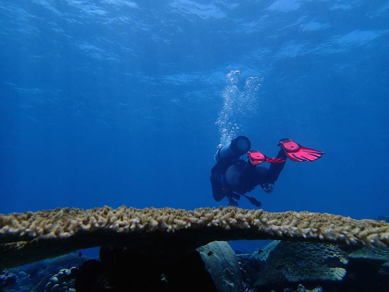 An ACCRETE researcher glides over a reef in the Chagos archipelago.