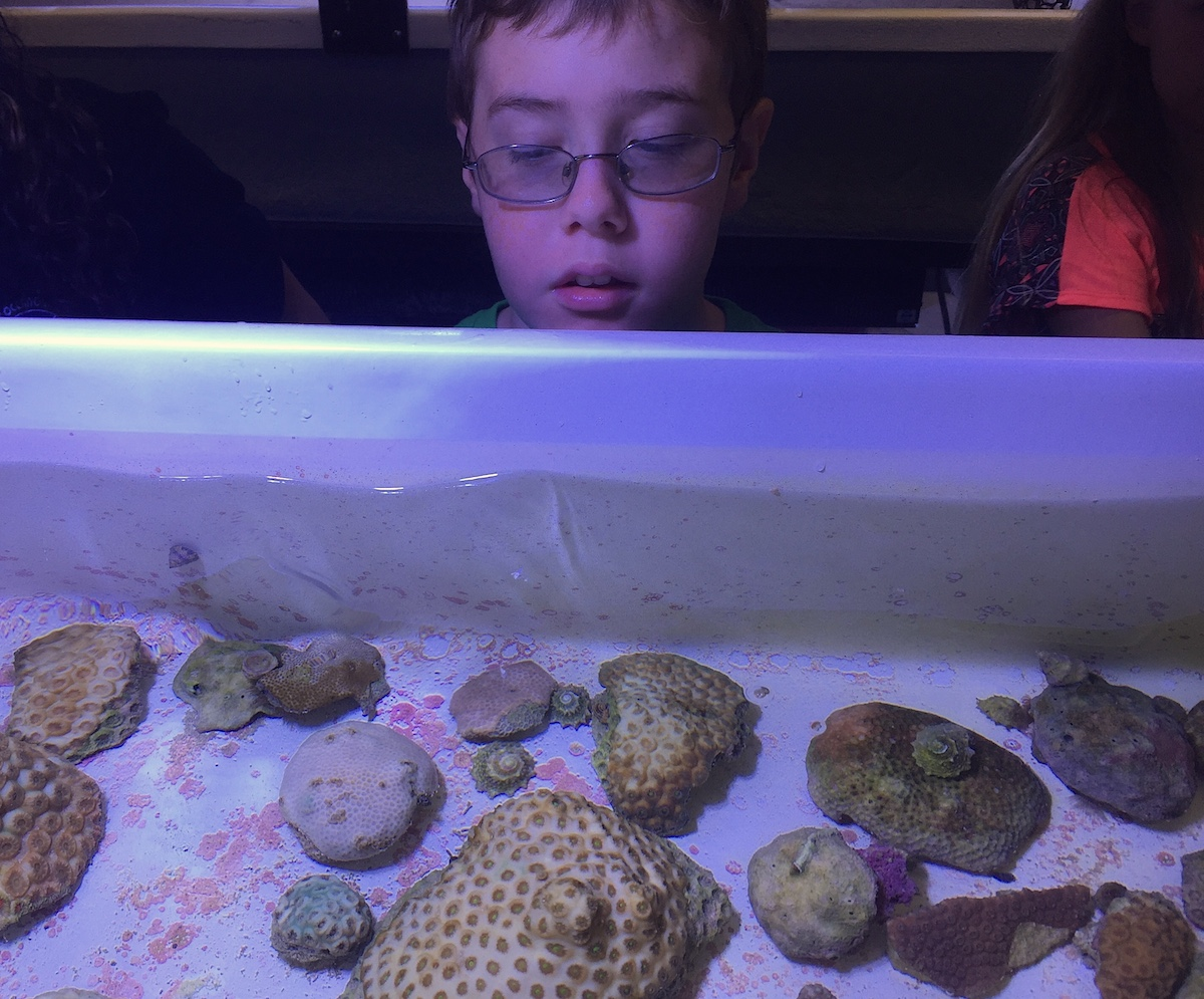 A student peers down at coral species in a nursery at the UM Rosenstiel School. Image credit: NOAA