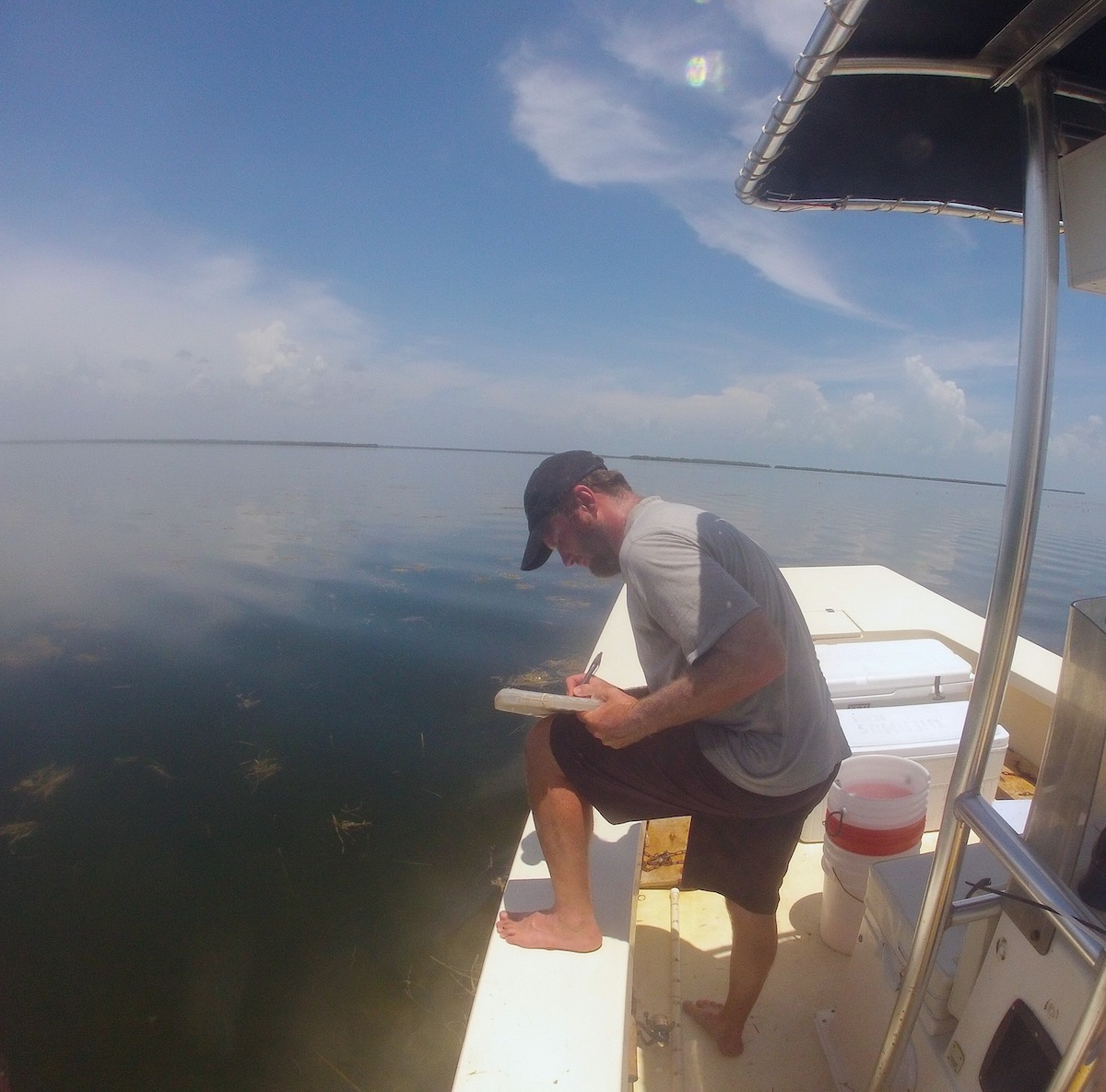 AOML scientist assesses the seagrass cover during a survey in Florida Bay. Image credit: NOAA