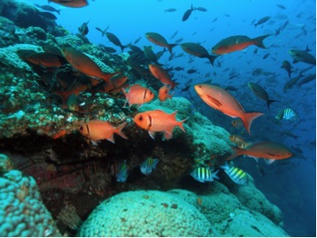 Fish species in NOAA's Flower Garden Banks National Marine Sanctuary, off Texas.