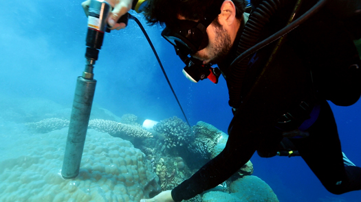 diver drilling for coral core samples