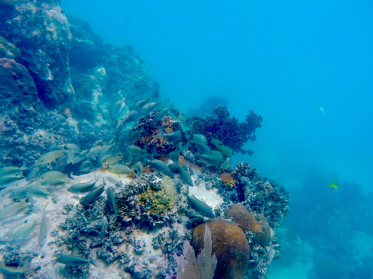 Healthy coral and reef fish along the dive site. Image credit: NOAA