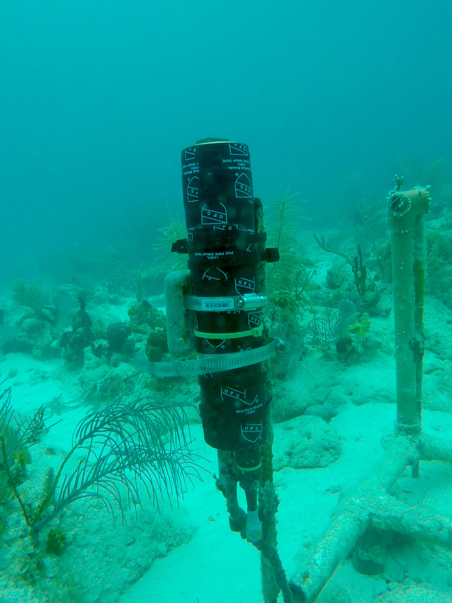 A newly installed ECO-PAR sensor to measure light on the reef. Image credit: NOAA