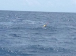 The first glider successfully deployed and transmitting data. Image credit: NOAA