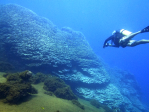 Diver examines a coral reef structure (Porites rus) off the coast of Maug. Image credit: NOAA