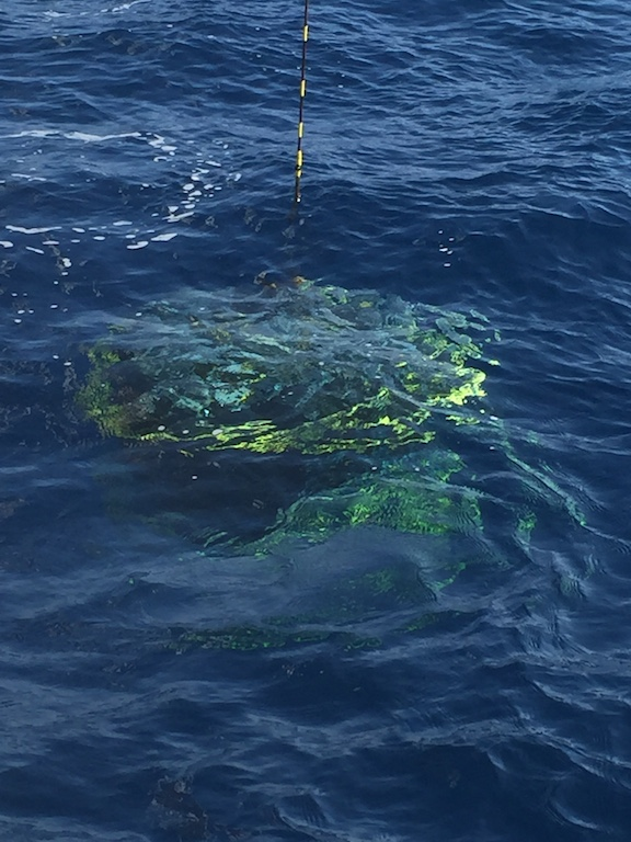 CTD under sparkling clear blue water. Image credit: NOAA
