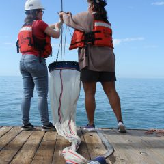 Scientists prepare the bongo net for plankton tows. Image credit: NOAA