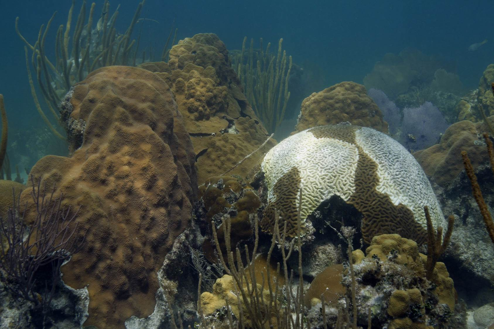 Florida Coral Disease April 2018