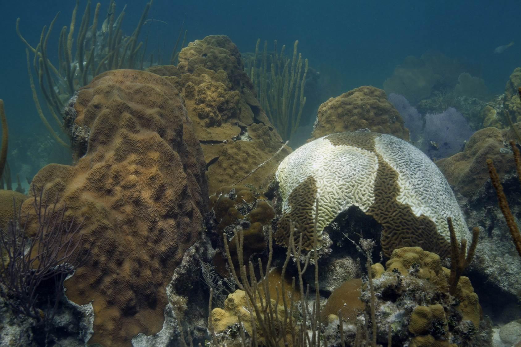 Florida Coral Disease April 2018