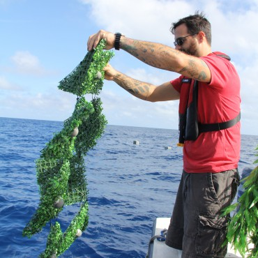 Deploying Sargassum Drifters