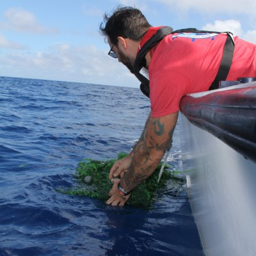Deploying Sargassum 2