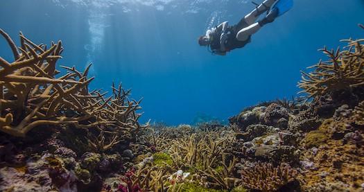Reefscape in Fagatele Bay