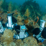 Subsurface Automated Samplers on the reef. Photo Credit, NOAA.