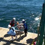 Photo of research being done on Red Tide from the R/V Walton Smith. Photo Credit: NOAA AOML.