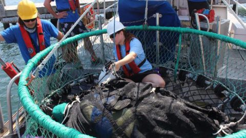 The NOAA team along with personnel from the Gulfarium Marine Adventure Park work to secure a leatherback prior to release. Image credit: Gulfarium Marine Adventure Park