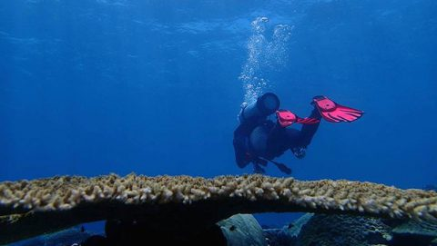 A researcher glides over a reef in the Chagos archipelago. Photo credit: Lauren Valentino, NOAA