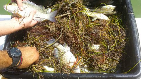 The contents of an otter trawl is assessed. Image credit: NOAA