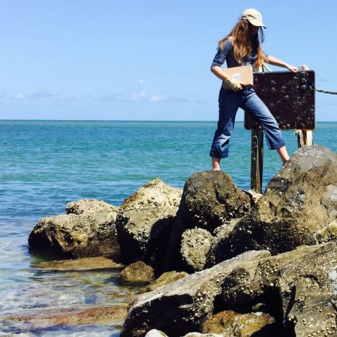 An AOML citizen scientist scopes out a sampling site on Key Biscayne. Image credit: NOAA