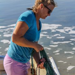 Researcher pulls up a trawl in order to document species during the Juvenile Sportfish Survey. Photo Credit: NOAA AOML.