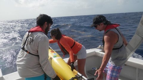 AOML staff work alongside Caribbean Coastal Ocean Observing System and University of Puerto Rico at Mayaguez personnel to launch the glider. Image credit: NOAA