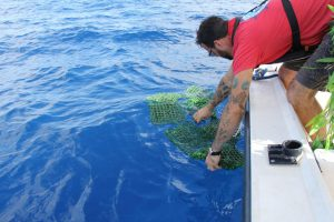 AOML researcher deploying a GPS tracked sargassum-drifter