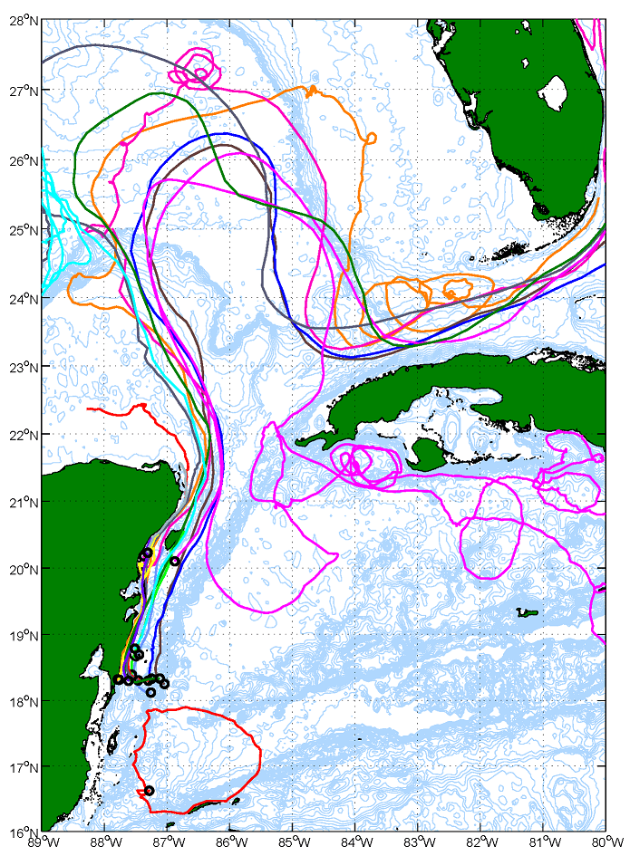 Trajectories of all drifters that were deployed during the January 2007 cruise. The drifters were drogued at 15 m depth, and each point represents a 6 hour subsampled location of a drifter. The trajectories clearly show the northern and southern circulation regimes, and illustrate the connectivity between the MBRS, Gulf of Mexico, south Florida, and Cuba coastal waters. Image Credit: NOAA
