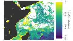 Ocean chlorophyll-a composite map using NOAA VIRS and NASA MODIS satellites. (Credit: Dr. Greg Silsbe)