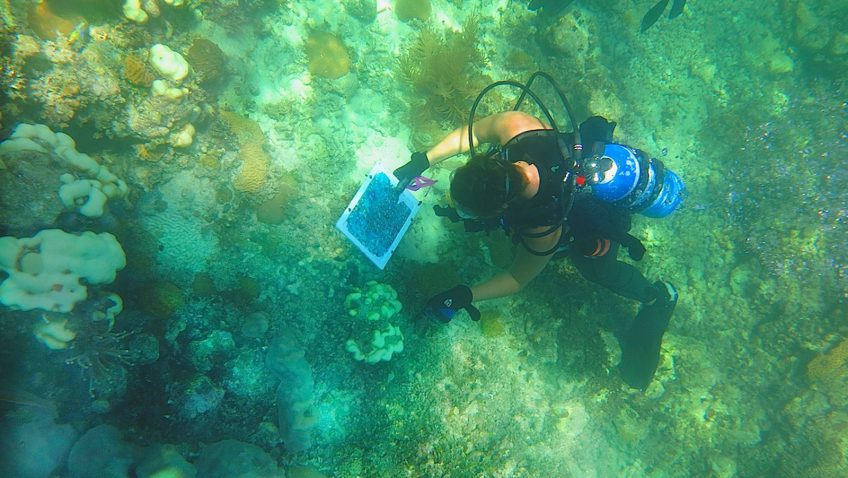 An AOML coral researcher uses a photo mosaic to locate a bleached coral head on a reef in the Florida Keys. Image credit: NOAA
